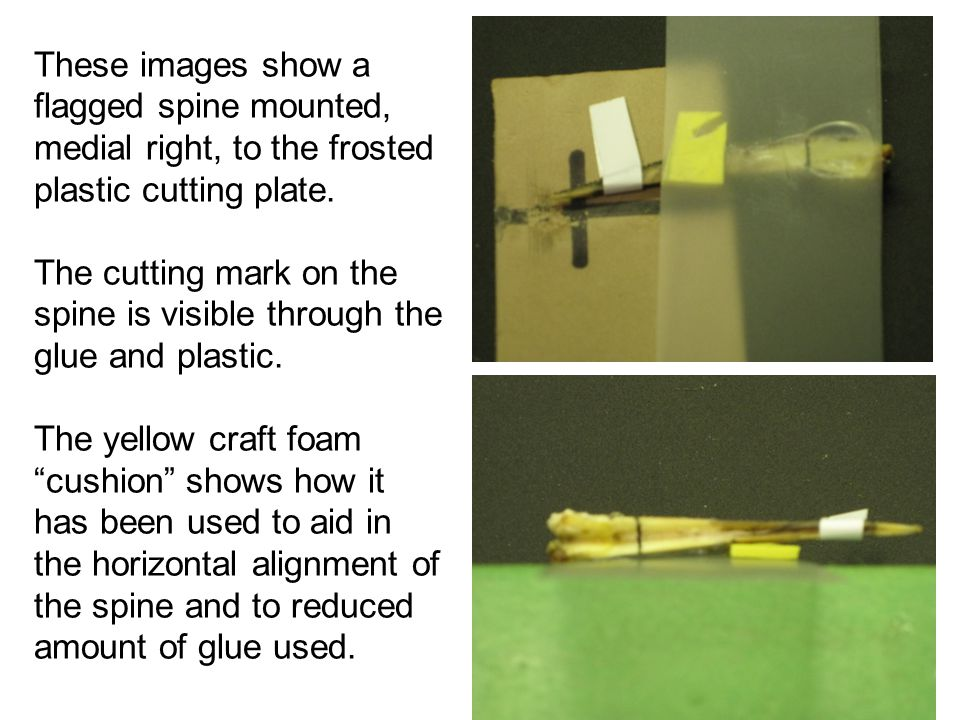 These images show a flagged spine mounted, medial right, to the frosted plastic cutting plate.