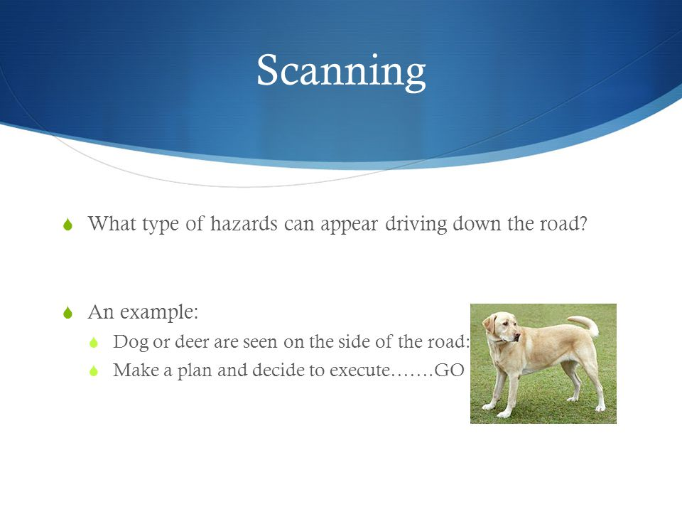 Scanning  What type of hazards can appear driving down the road.