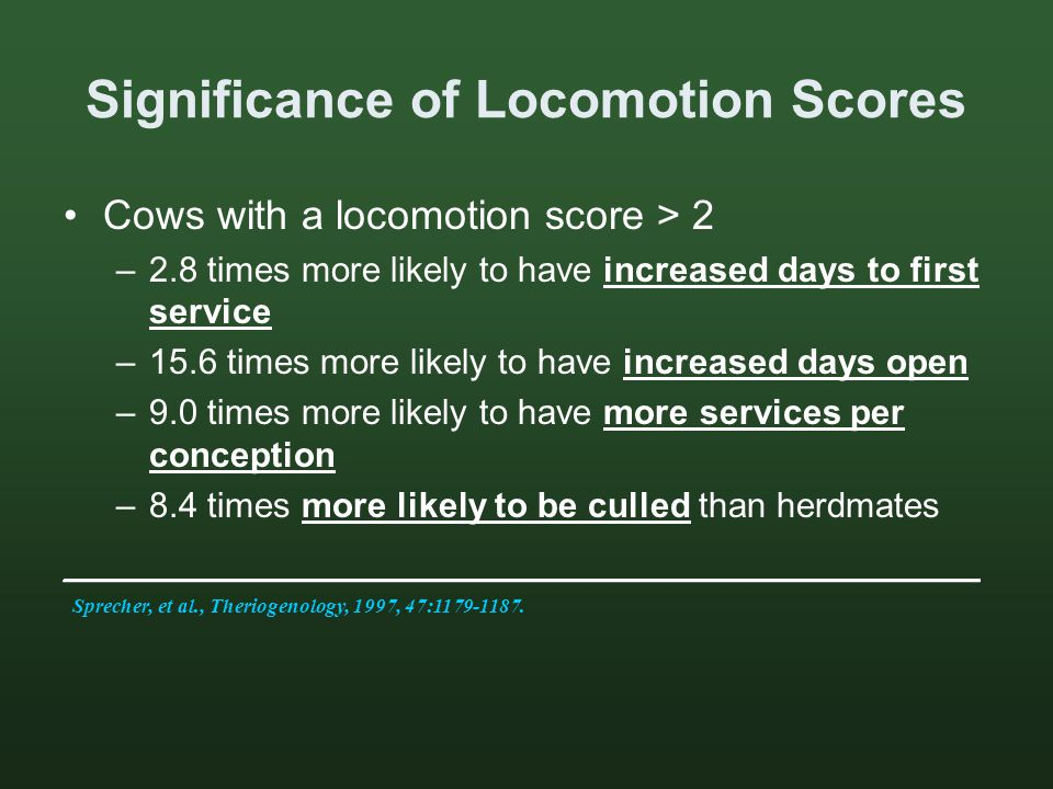 Significance of Locomotion Scores Cows with a locomotion score > 2 –2.8 times more likely to have increased days to first service –15.6 times more likely to have increased days open –9.0 times more likely to have more services per conception –8.4 times more likely to be culled than herdmates ________________________________________ Sprecher, et al., Theriogenology, 1997, 47:1179-1187.