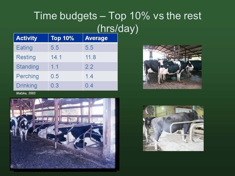 Time budgets – Top 10% vs the rest (hrs/day) ActivityTop 10%Average Eating5.5 Resting14.111.8 Standing1.12.2 Perching0.51.4 Drinking0.30.4 Matzke, 2003