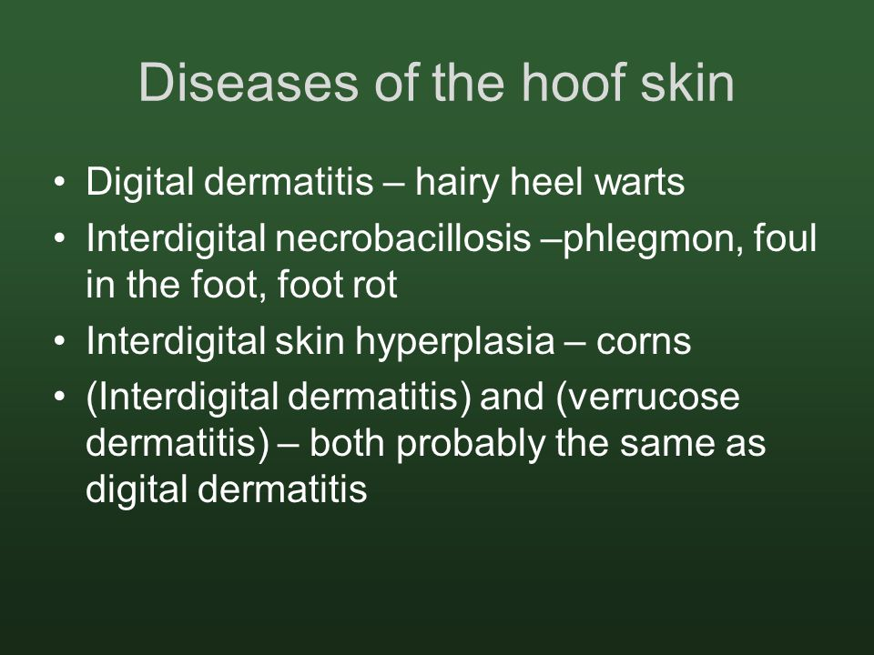 Diseases of the hoof skin Digital dermatitis – hairy heel warts Interdigital necrobacillosis –phlegmon, foul in the foot, foot rot Interdigital skin hyperplasia – corns (Interdigital dermatitis) and (verrucose dermatitis) – both probably the same as digital dermatitis