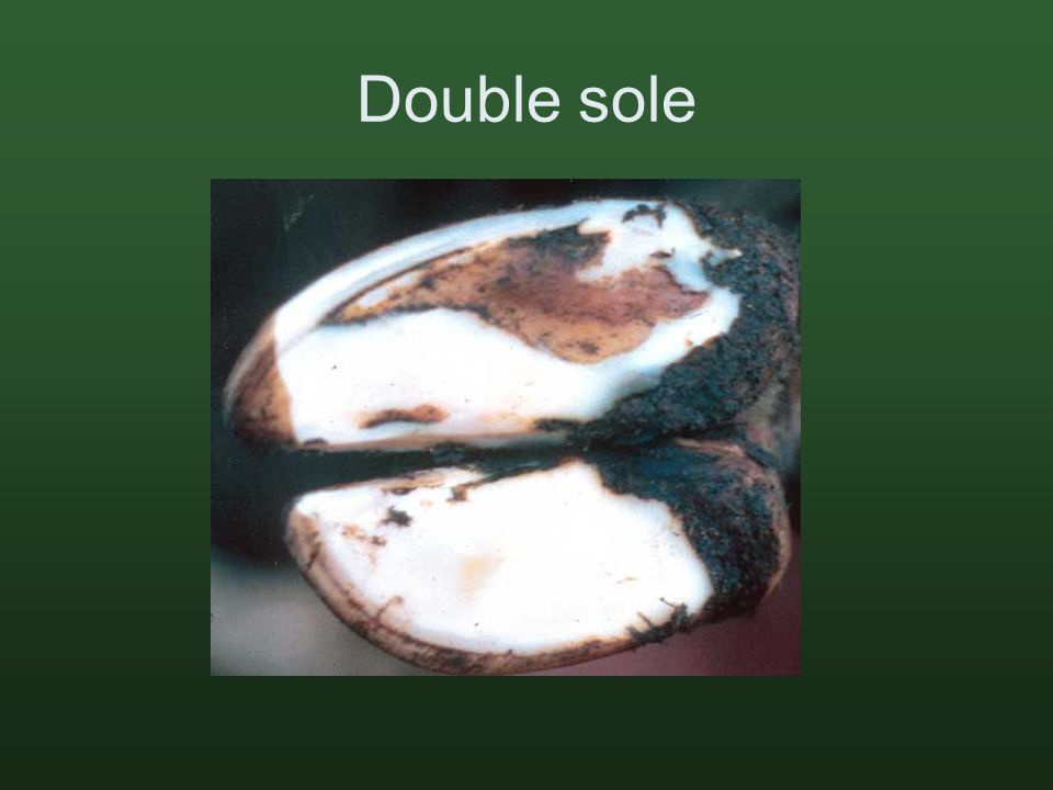 Double sole