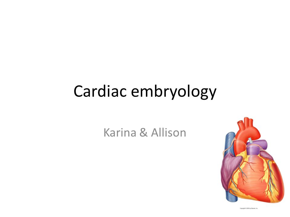 What we are going to cover… 1.Cardiac embryology 2.Septal formation: atrial, ventricular and arterial outflow 3.Heart defects 4.Timeline of cardiac development