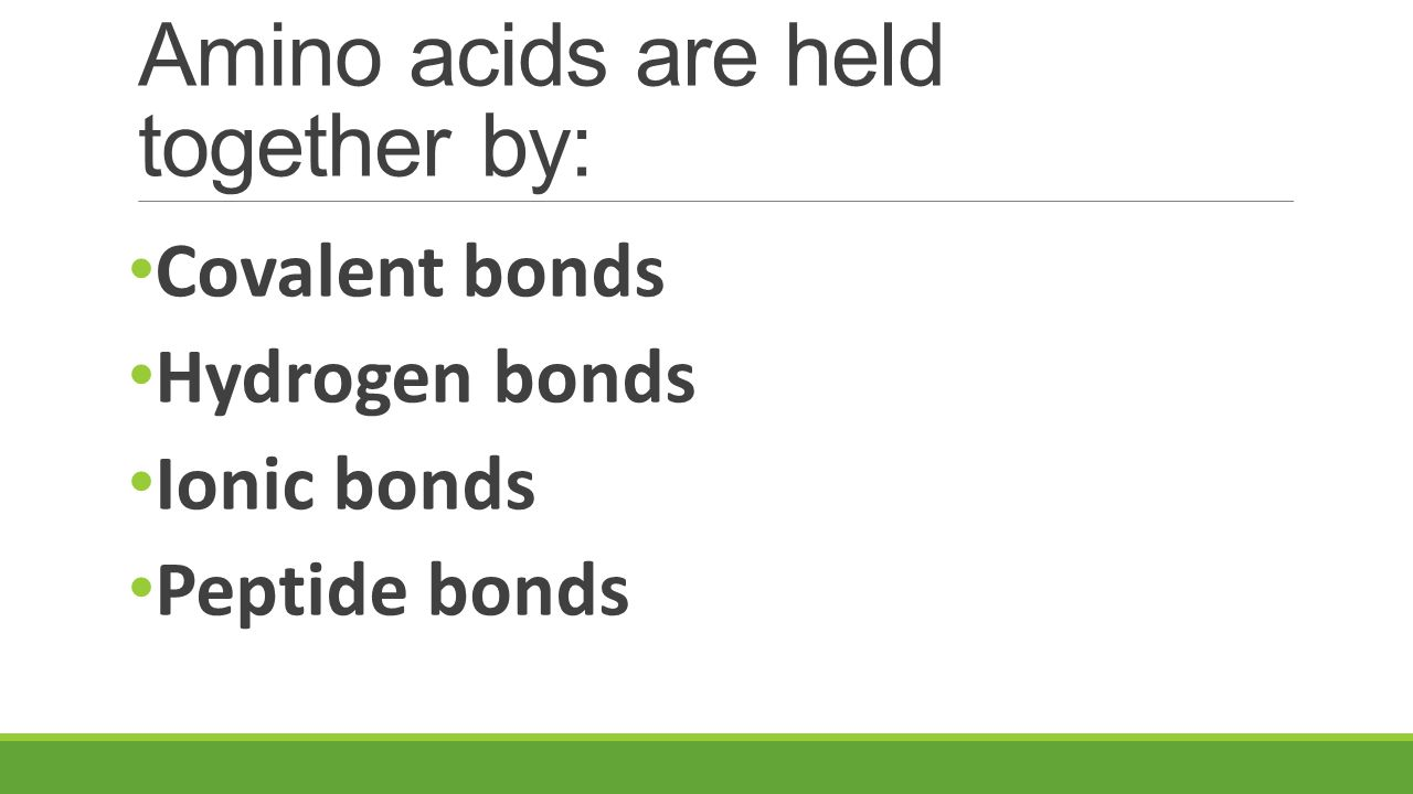 Amino acids are held together by: Covalent bonds Hydrogen bonds Ionic bonds Peptide bonds