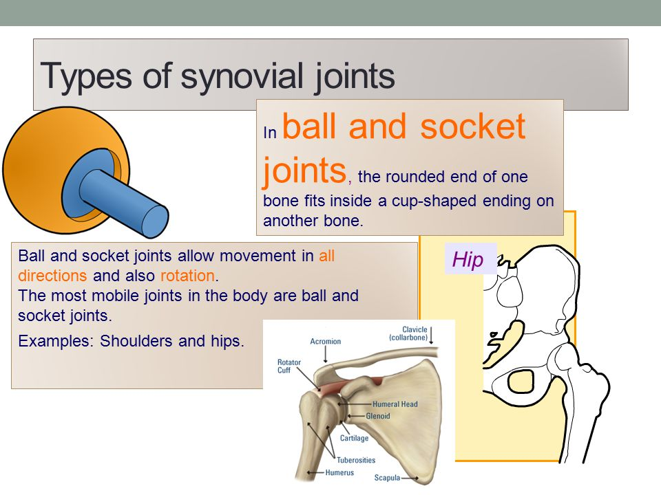 Types of synovial joints In ball and socket joints, the rounded end of one bone fits inside a cup-shaped ending on another bone. Ball and socket joint