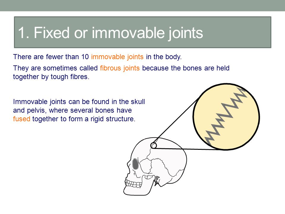 1. Fixed or immovable joints There are fewer than 10 immovable joints in the body. They are sometimes called fibrous joints because the bones are held