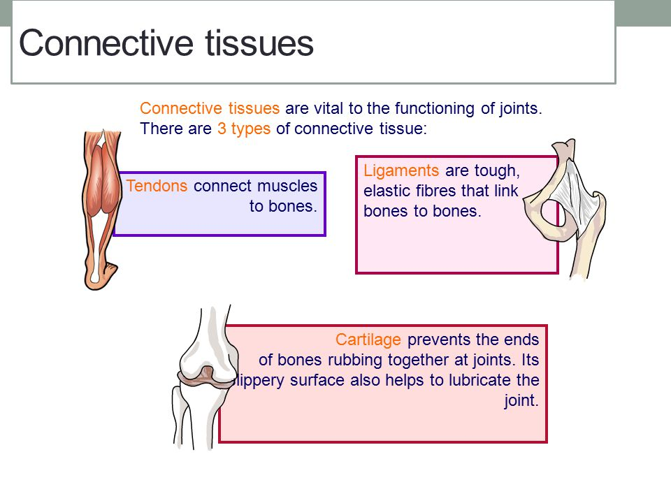 Connective tissues Connective tissues are vital to the functioning of joints. There are 3 types of connective tissue: Ligaments are tough, elastic fib