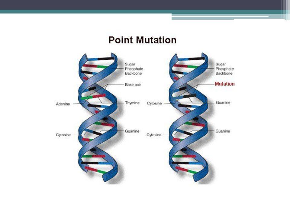 Stickler Syndrome Inheritance Two types ▫Autosomal Dominant ▫Autosomal Recessive