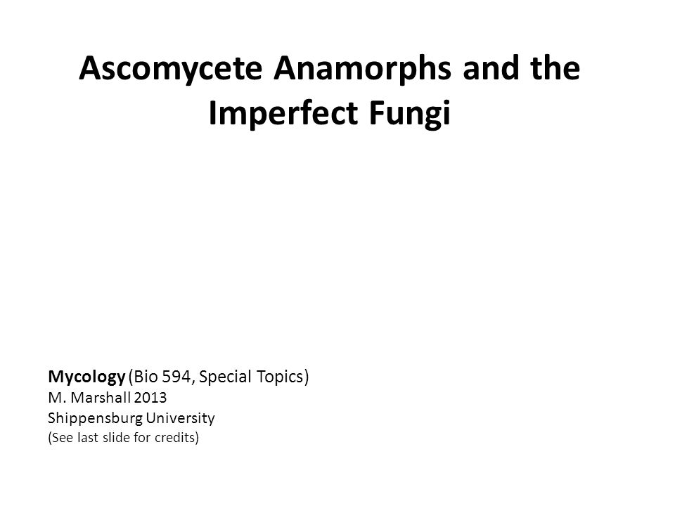 Ascomycete Anamorphs and the Imperfect Fungi Mycology (Bio 594, Special Topics) M. Marshall 2013 Shippensburg University (See last slide for credits)