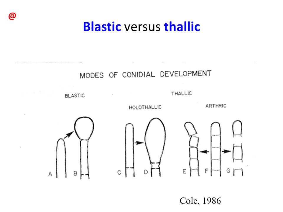 Blastic versus thallic Cole, 1986 @
