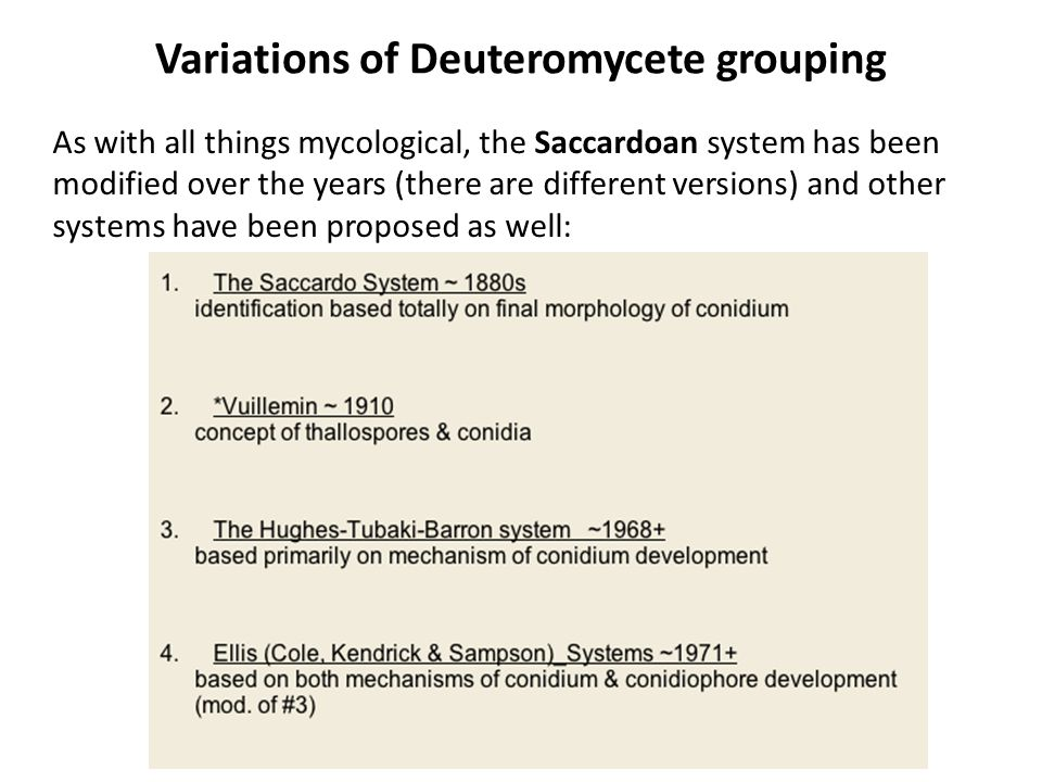 Arrangement of conidia at locus Solitary Catenate = true chains Seriate = false chains, spore heads – Dry spores – Wet spores (gleoid) @