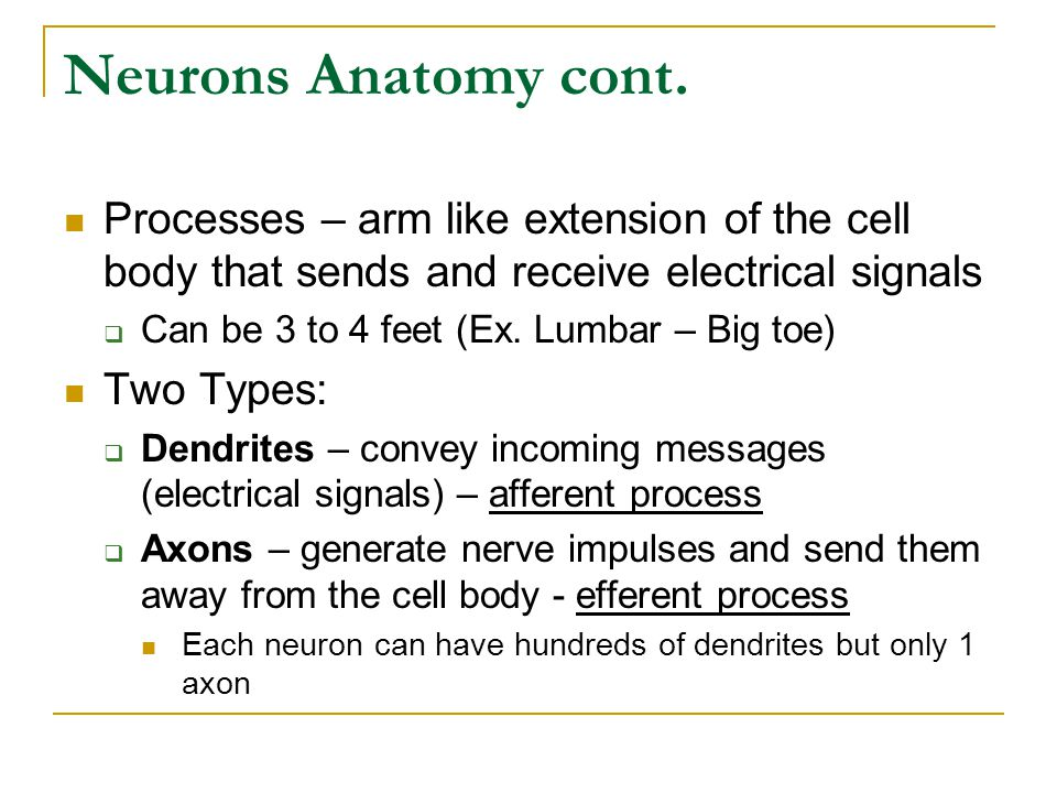 Neurons Anatomy cont.