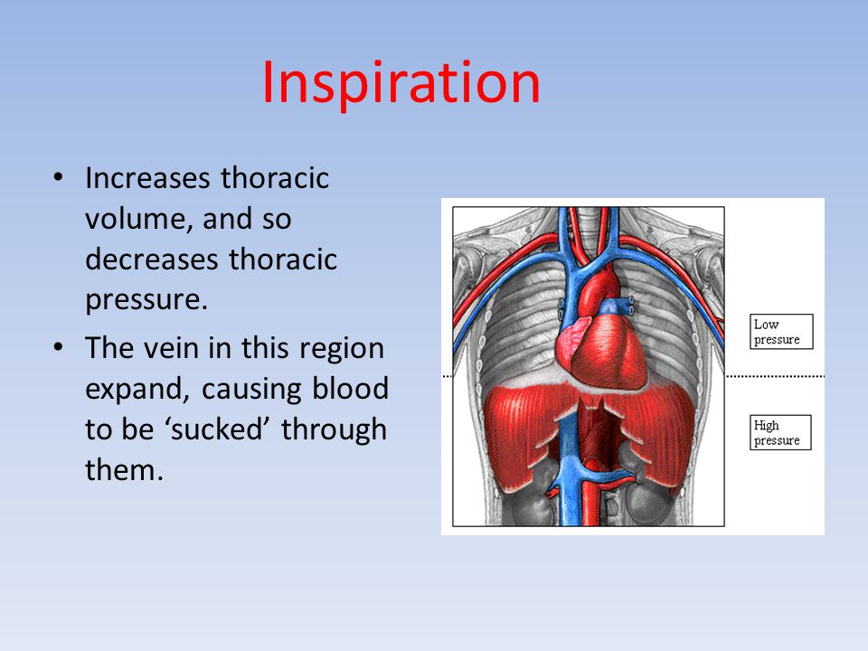 Inspiration Increases thoracic volume, and so decreases thoracic pressure. The vein in this region expand, causing blood to be 'sucked' through them.