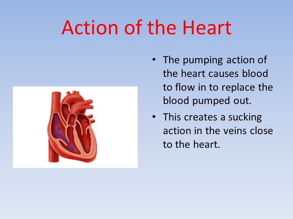 Action of the Heart The pumping action of the heart causes blood to flow in to replace the blood pumped out. This creates a sucking action in the vein