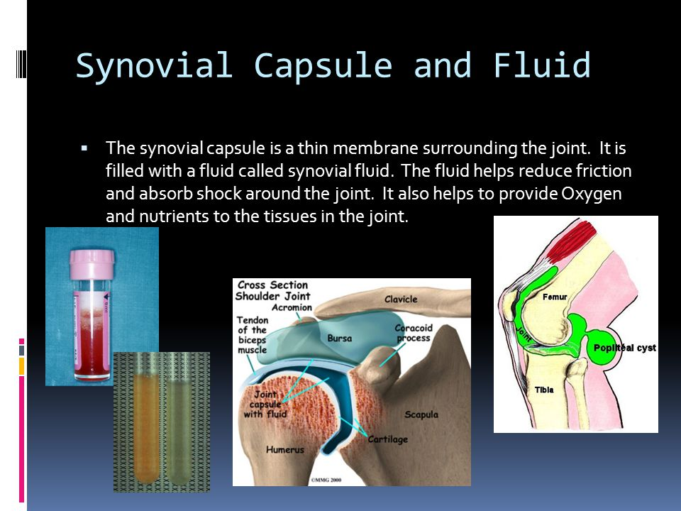 Synovial Capsule and Fluid  The synovial capsule is a thin membrane surrounding the joint.