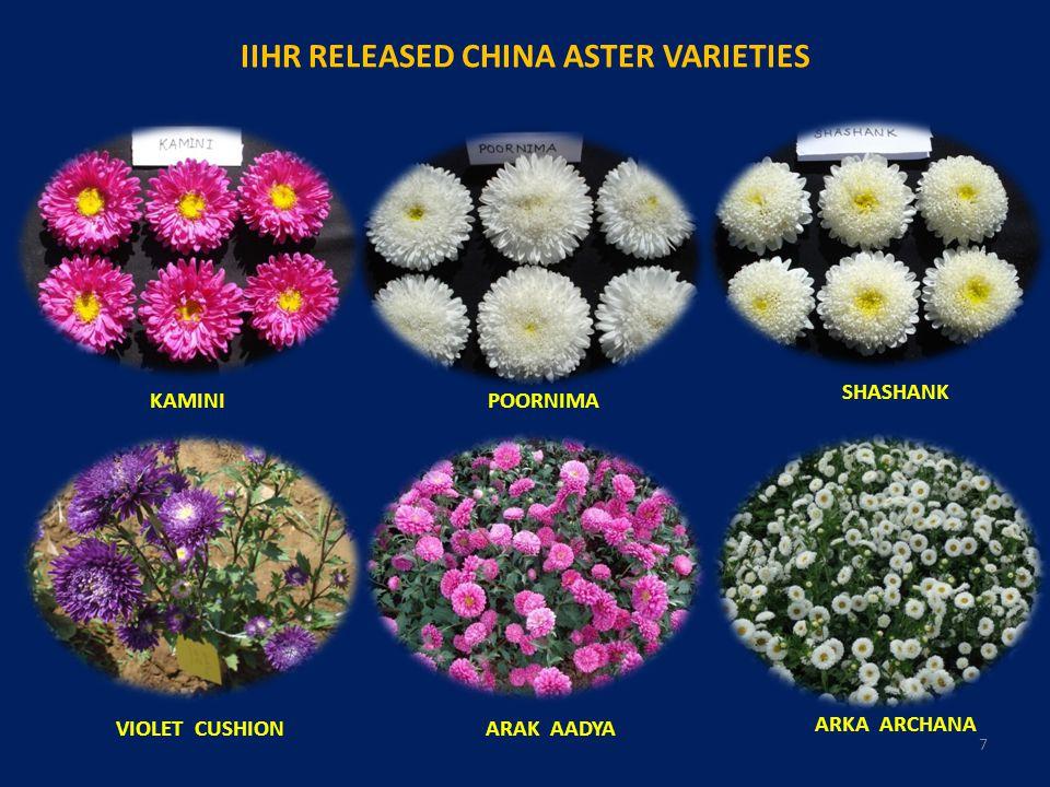 IIHR RELEASED CHINA ASTER VARIETIES VIOLET CUSHION KAMINI ARAK AADYA ARKA ARCHANA SHASHANK POORNIMA 7