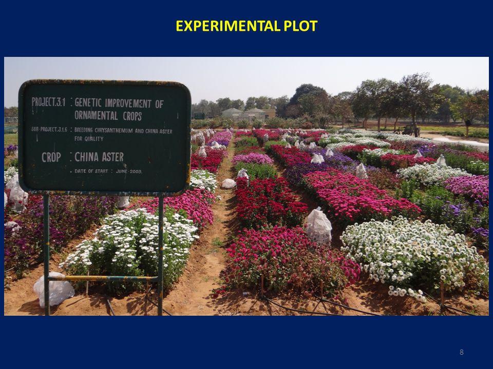 EXPERIMENTAL PLOT 8