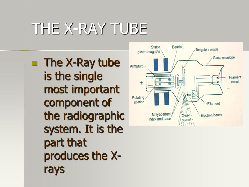 THE X-RAY TUBE The X-Ray tube is the single most important component of the radiographic system. It is the part that produces the X- rays The X-Ray tu
