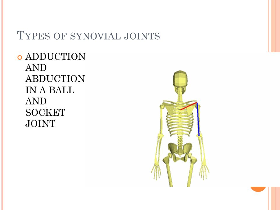T YPES OF SYNOVIAL JOINTS ADDUCTION AND ABDUCTION IN A BALL AND SOCKET JOINT