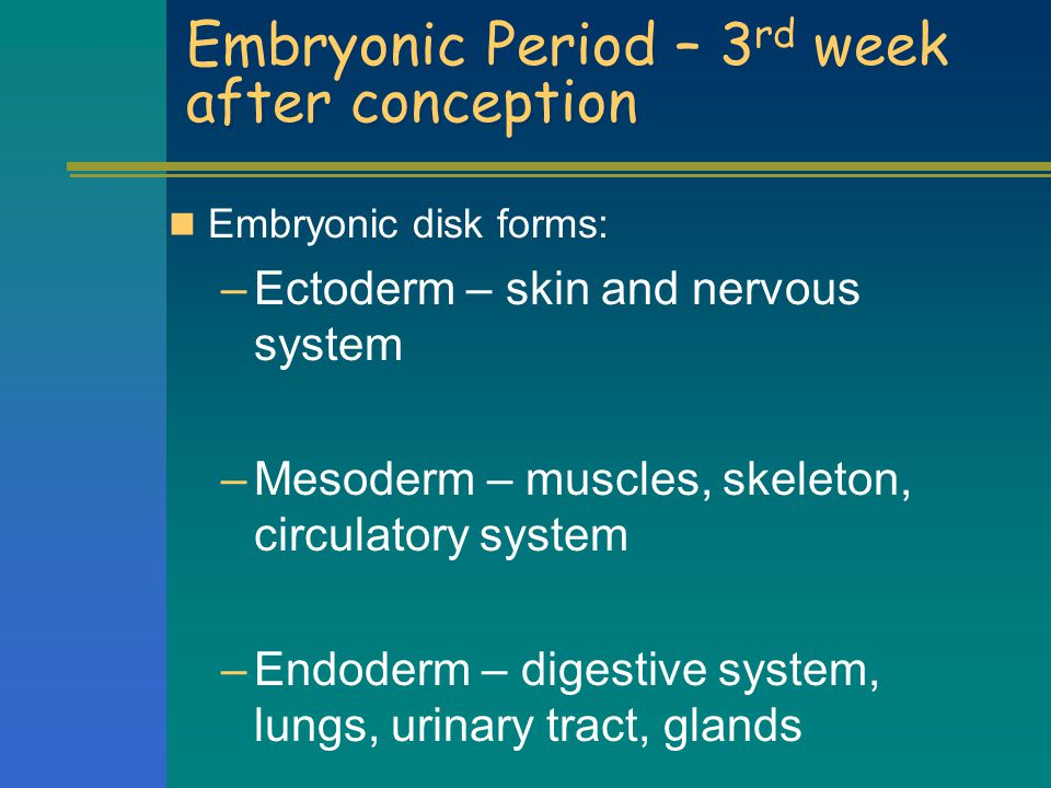 Embryonic Period (2-8 weeks) - Organogenesis Neural tube develops first, will become brain and spinal cord Next, heart begins to pump blood The basic structure of all the organ systems grows Eyes, ears, nose, jaw, neck, arms legs, fingers & toes form At the end of this period, it weighs less than one ounce, about one inch long.