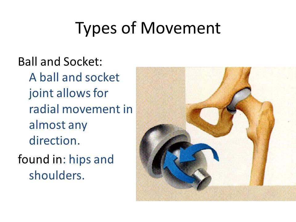 Types of Movement Ball and Socket: A ball and socket joint allows for radial movement in almost any direction. found in: hips and shoulders.