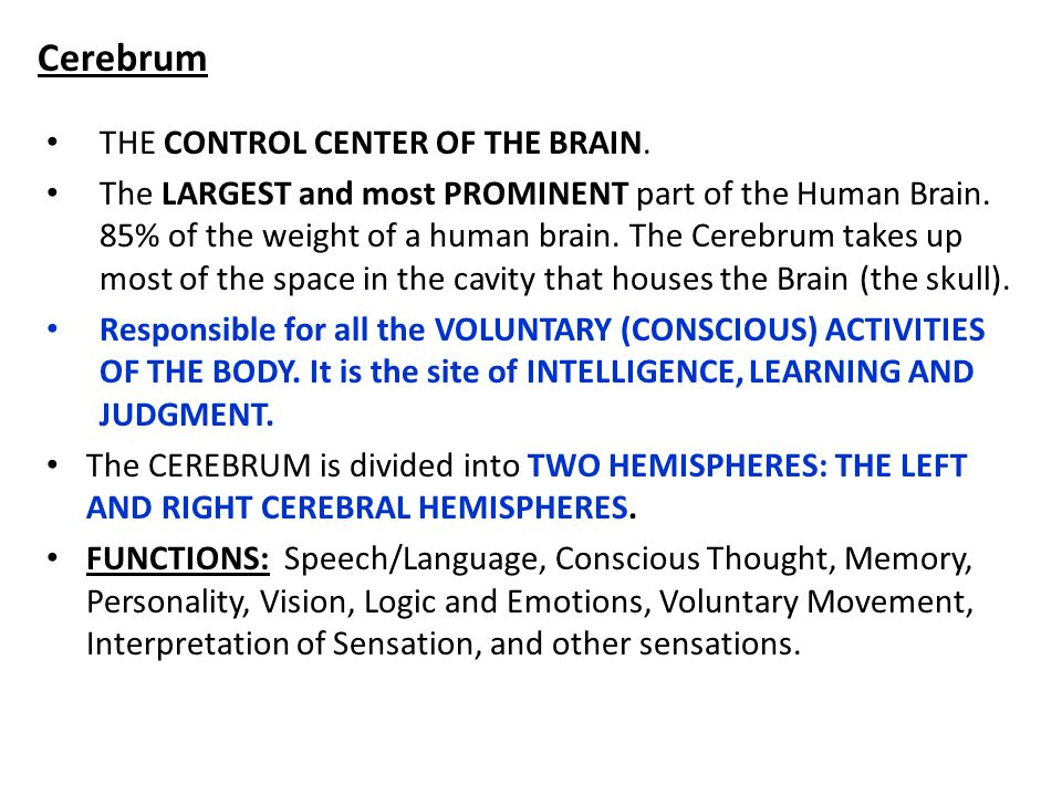 Occipital Lobe The occipital lobe is at the rear of the brain. It controls: vision recognition