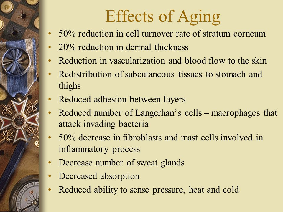 Effects of Aging 50% reduction in cell turnover rate of stratum corneum 20% reduction in dermal thickness Reduction in vascularization and blood flow to the skin Redistribution of subcutaneous tissues to stomach and thighs Reduced adhesion between layers Reduced number of Langerhan's cells – macrophages that attack invading bacteria 50% decrease in fibroblasts and mast cells involved in inflammatory process Decrease number of sweat glands Decreased absorption Reduced ability to sense pressure, heat and cold