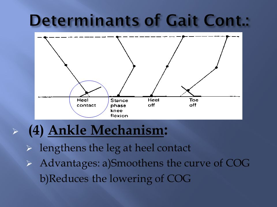(5) Foot mechanism : While knee is flexed the leg is lengthened at toe- off as ankle moves from dorsi flexion to plantar flexion Advantages: a) Smoothens the curve of COG b) Reduces the lowering of COG