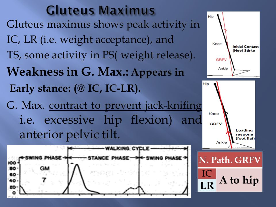 From this we can notice that: If bilateral weakness so The gluteus maximus lurch appears in both early and late stance phases of rt limb and lt limb.