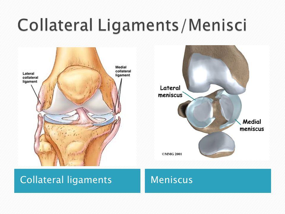 Collateral ligamentsMeniscus