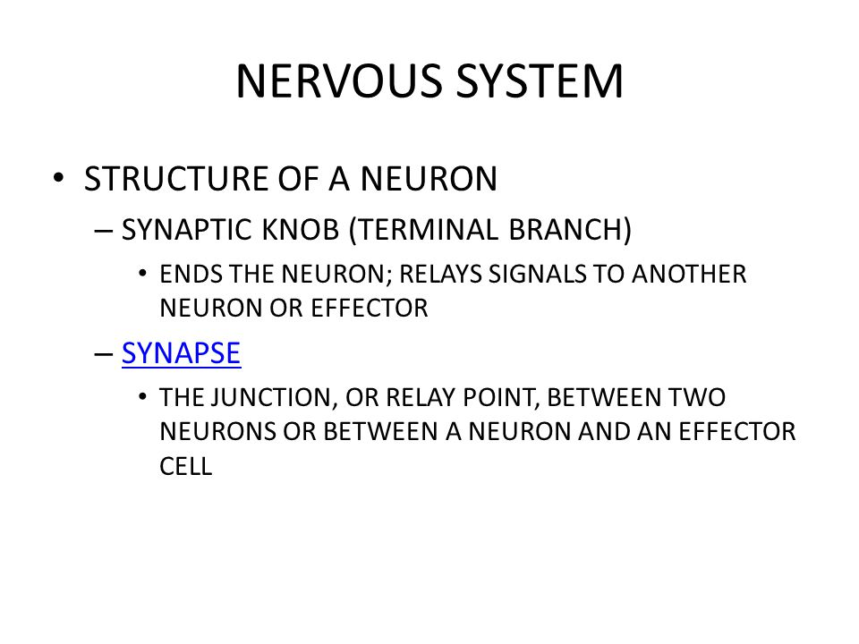 NERVOUS SYSTEM STRUCTURE OF A NEURON – SYNAPTIC KNOB (TERMINAL BRANCH) ENDS THE NEURON; RELAYS SIGNALS TO ANOTHER NEURON OR EFFECTOR – SYNAPSE SYNAPSE