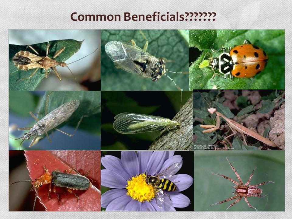 Common Beneficials