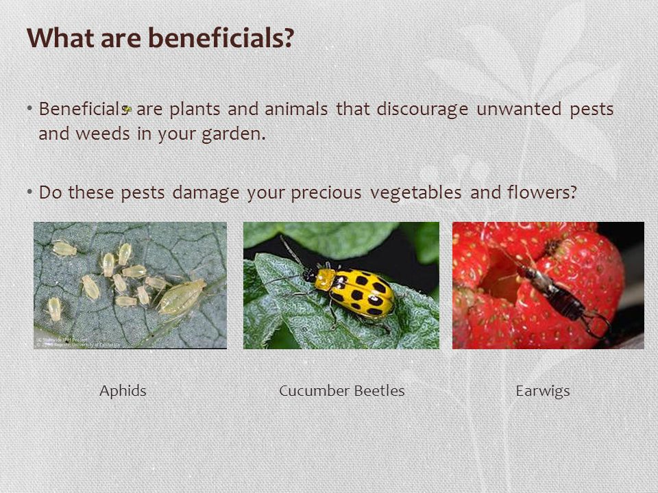What are beneficials.