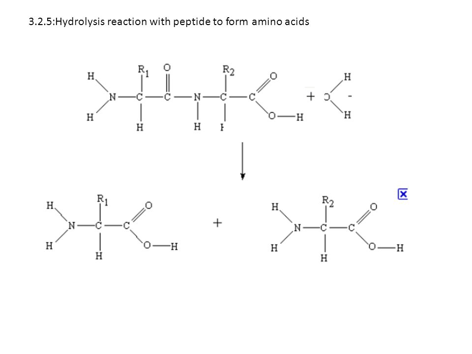 3.2.5:Hydrolysis reaction with peptide to form amino acids