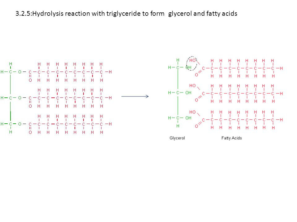 3.2.5:Hydrolysis reaction with triglyceride to form glycerol and fatty acids