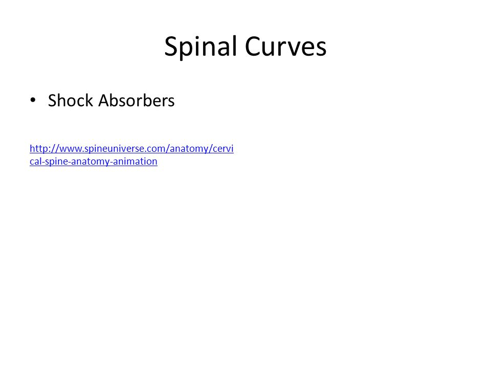 Spinal Curves Shock Absorbers http://www.spineuniverse.com/anatomy/cervi cal-spine-anatomy-animation
