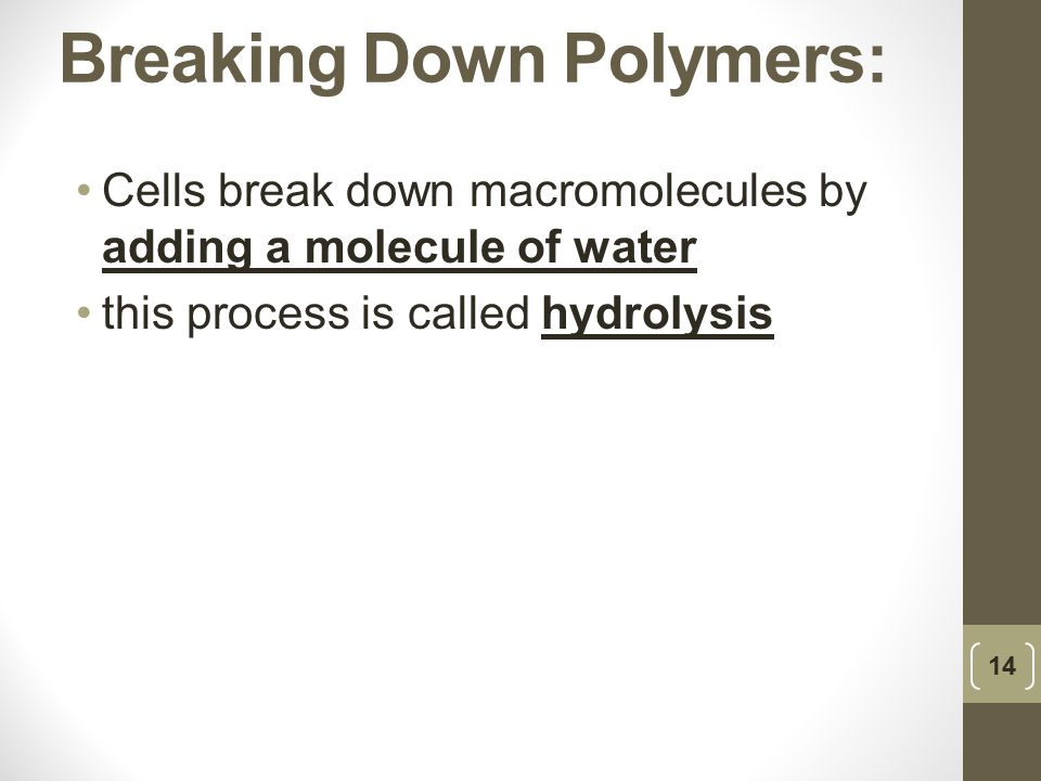 Breaking Down Polymers: Cells break down macromolecules by adding a molecule of water this process is called hydrolysis 14