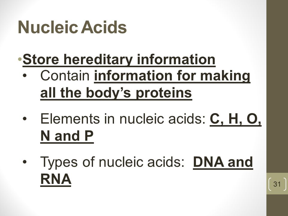 Nucleic Acids Store hereditary information 31 Contain information for making all the body's proteins Elements in nucleic acids: C, H, O, N and P Types