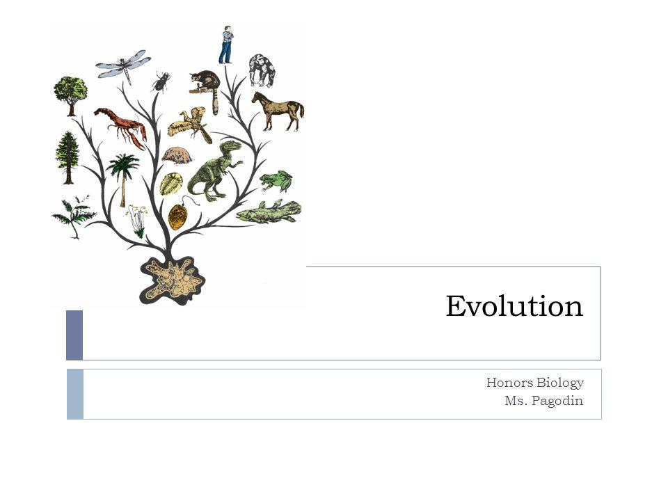 Evolution Honors Biology Ms. Pagodin
