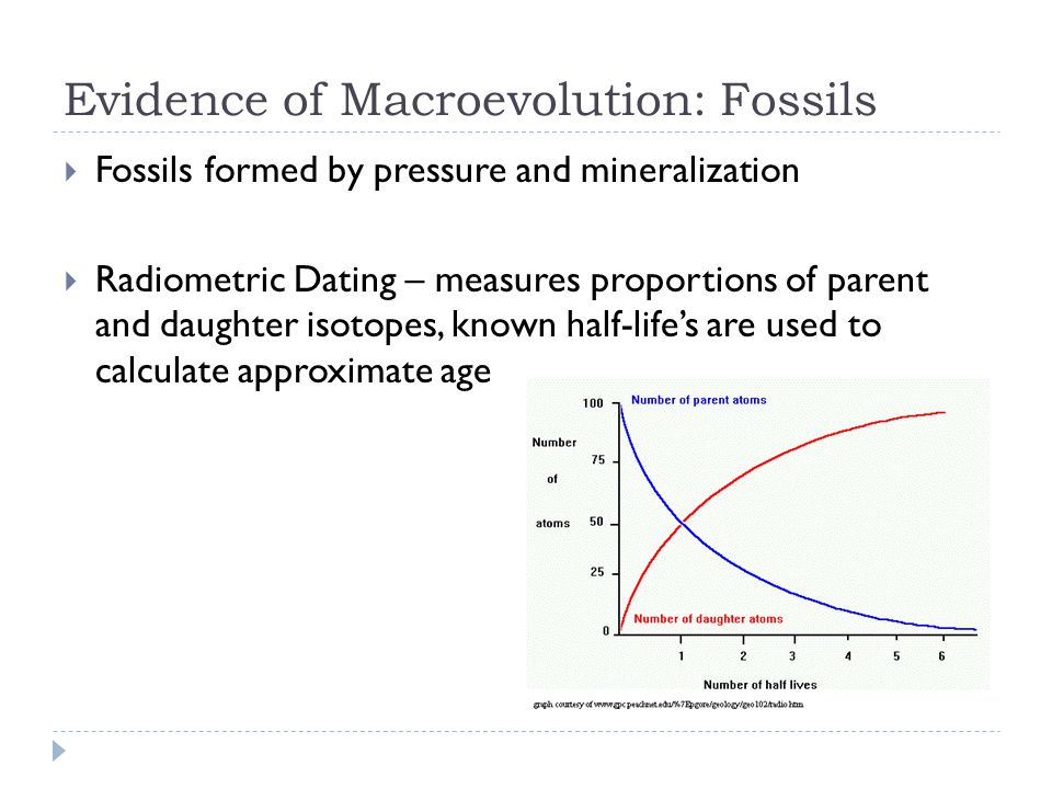 Evidence of Macroevolution: Fossils  Fossils formed by pressure and mineralization  Radiometric Dating – measures proportions of parent and daughter