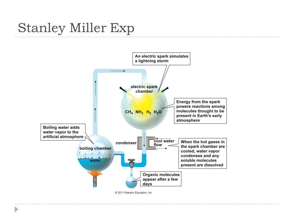 Stanley Miller Exp