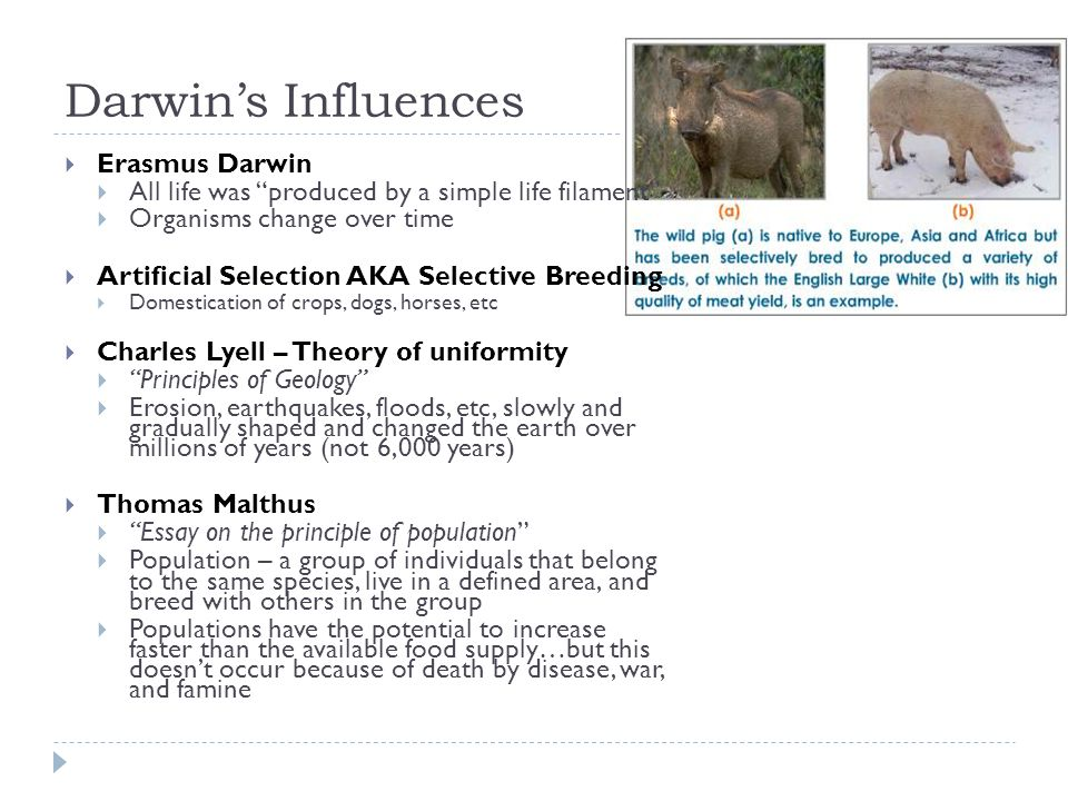 """Darwin's Influences  Erasmus Darwin  All life was """"produced by a simple life filament""""  Organisms change over time  Artificial Selection AKA Selec"""