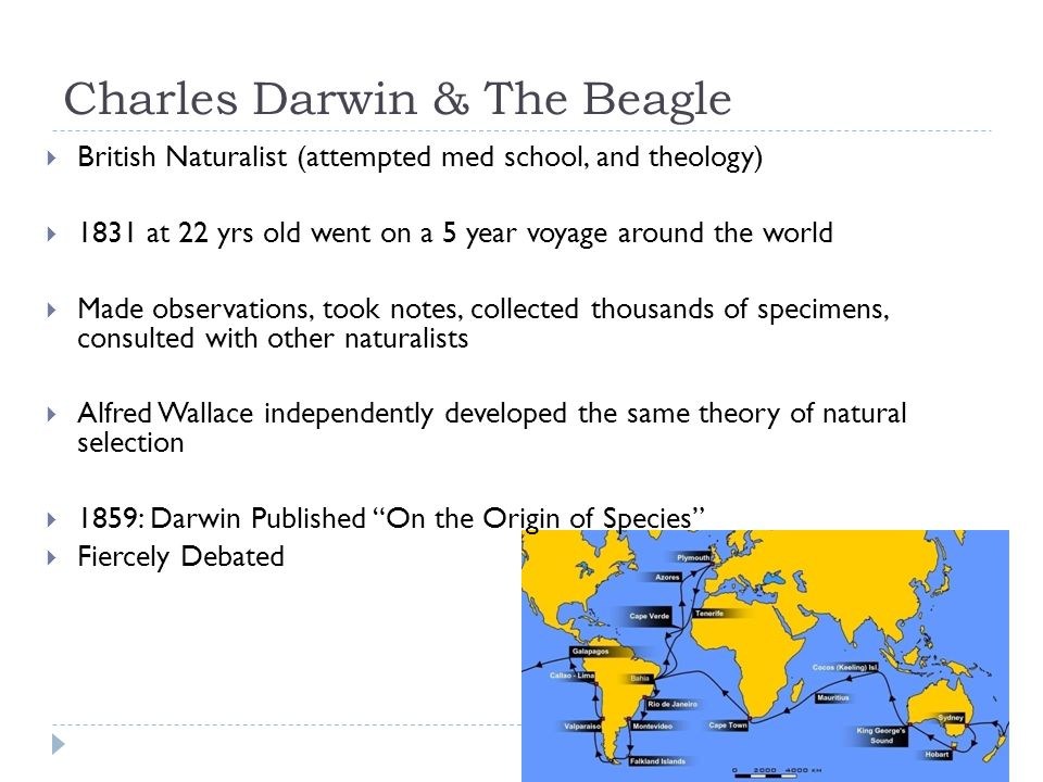 Charles Darwin & The Beagle  British Naturalist (attempted med school, and theology)  1831 at 22 yrs old went on a 5 year voyage around the world 