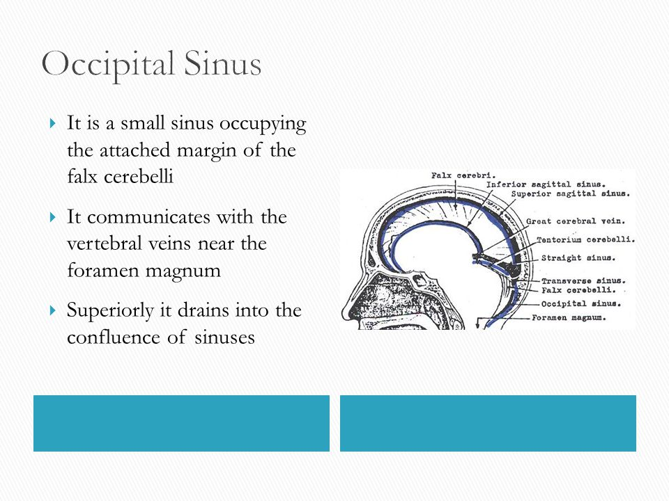  It is a small sinus occupying the attached margin of the falx cerebelli  It communicates with the vertebral veins near the foramen magnum  Superio