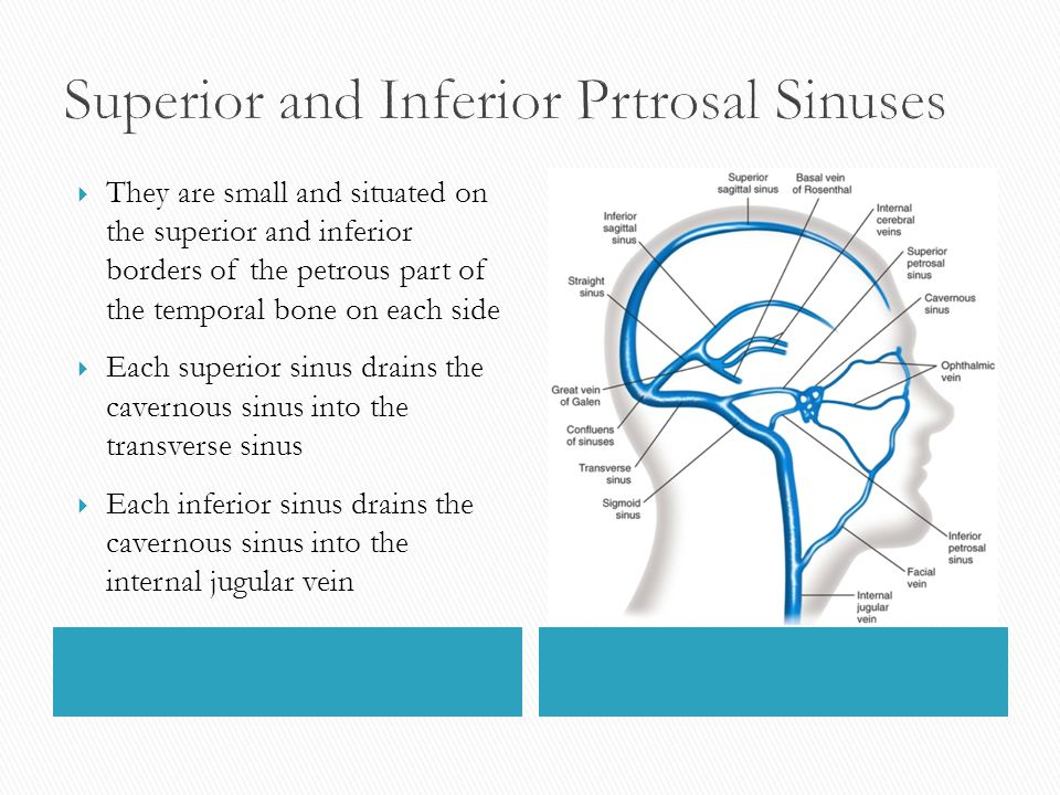  They are small and situated on the superior and inferior borders of the petrous part of the temporal bone on each side  Each superior sinus drains