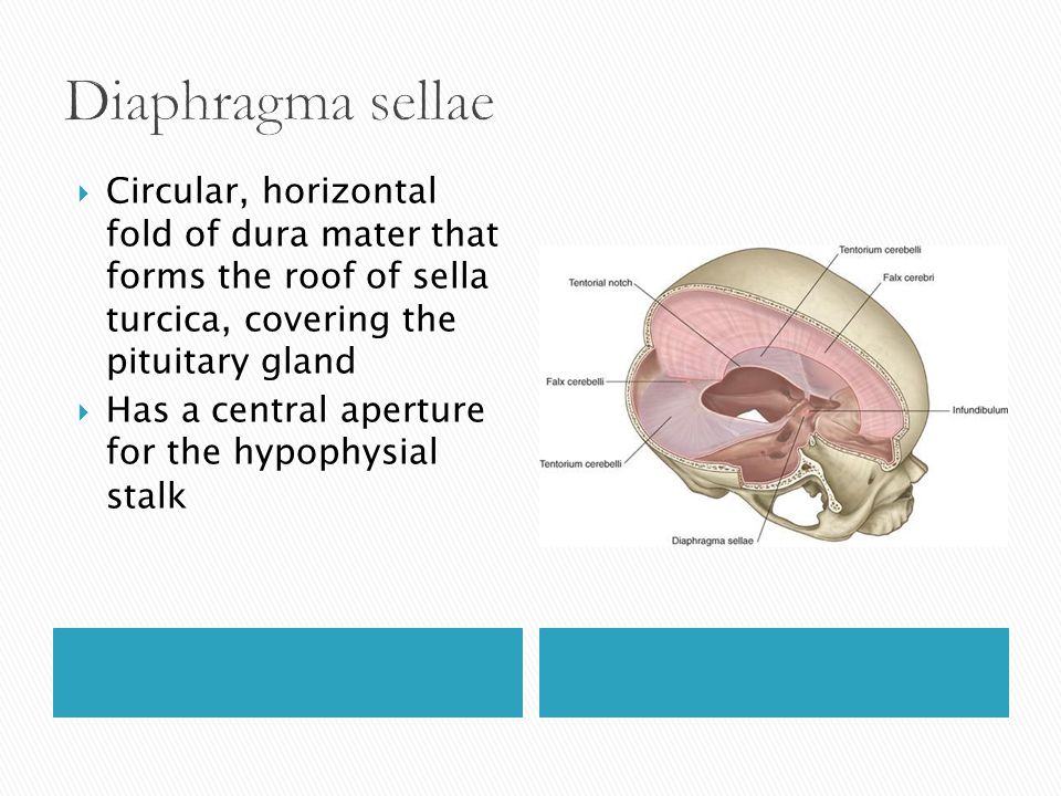  Circular, horizontal fold of dura mater that forms the roof of sella turcica, covering the pituitary gland  Has a central aperture for the hypophys