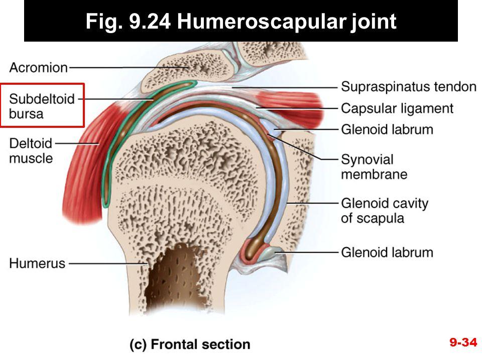 Fig. 9.24 Humeroscapular joint 9-34