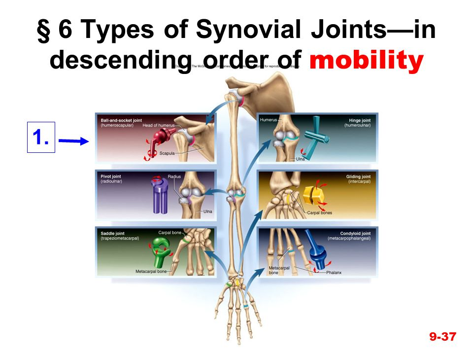 9-37 § 6 Types of Synovial Joints—in descending order of mobility 1.