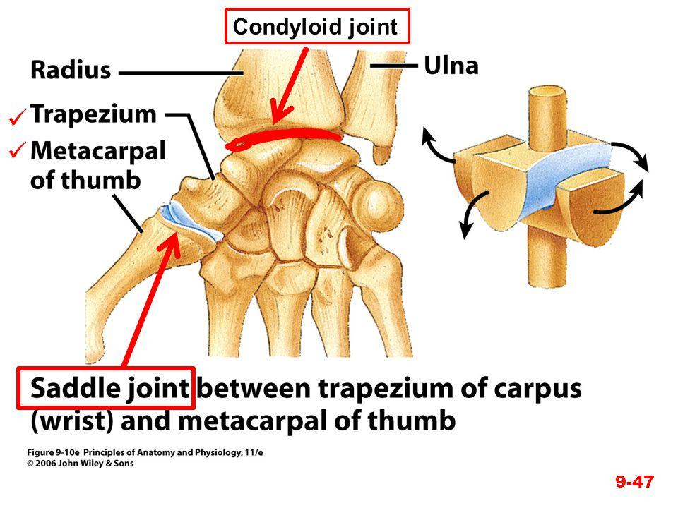9-47 Condyloid joint