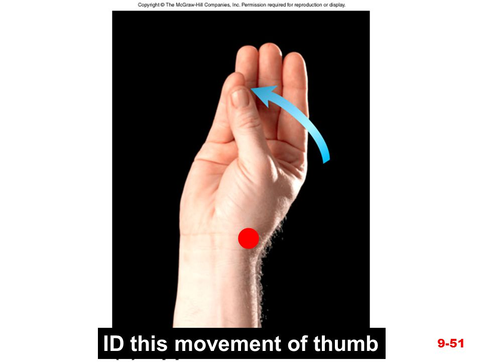 Figure 9.21e ID this movement of thumb 9-51